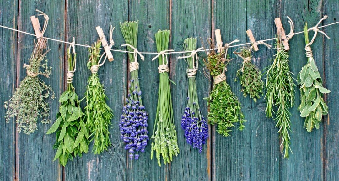 Herbs On Line ⋆ C Amp W Appliance Service