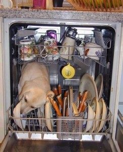 Dishwasher Repair: What Not to Wash in Your Dishwasher