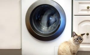 Cat sitting in front of washing machine
